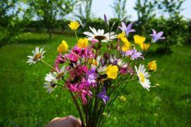 Kvetoucí louka