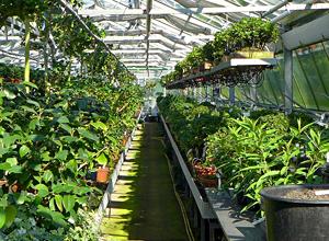 Řízená termoregulace skleníků
